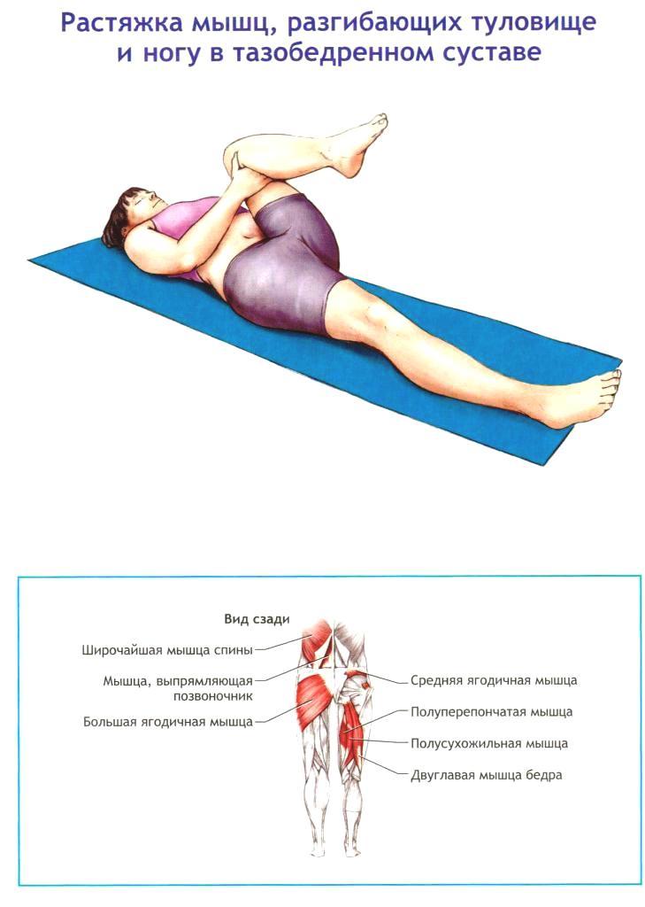 запишитесь растяжка тазобедренного сустава в картинках атласные